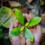 female-hands-holding-spring-sprout-seed-tree-on-blurred-background-environment-concept.jpg