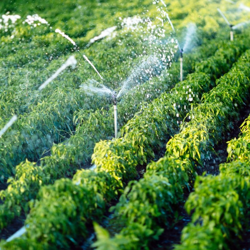 irrigation-system-in-function-42PA8GY-scaled.jpg