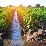 watering-of-agricultural-crops-countryside-natural-watering-irrigation.jpg